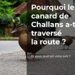 Pourquoi le canard de Challans a-t-il traversé la route ?