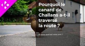 Read more about the article Pourquoi le canard de Challans a-t-il traversé la route ?
